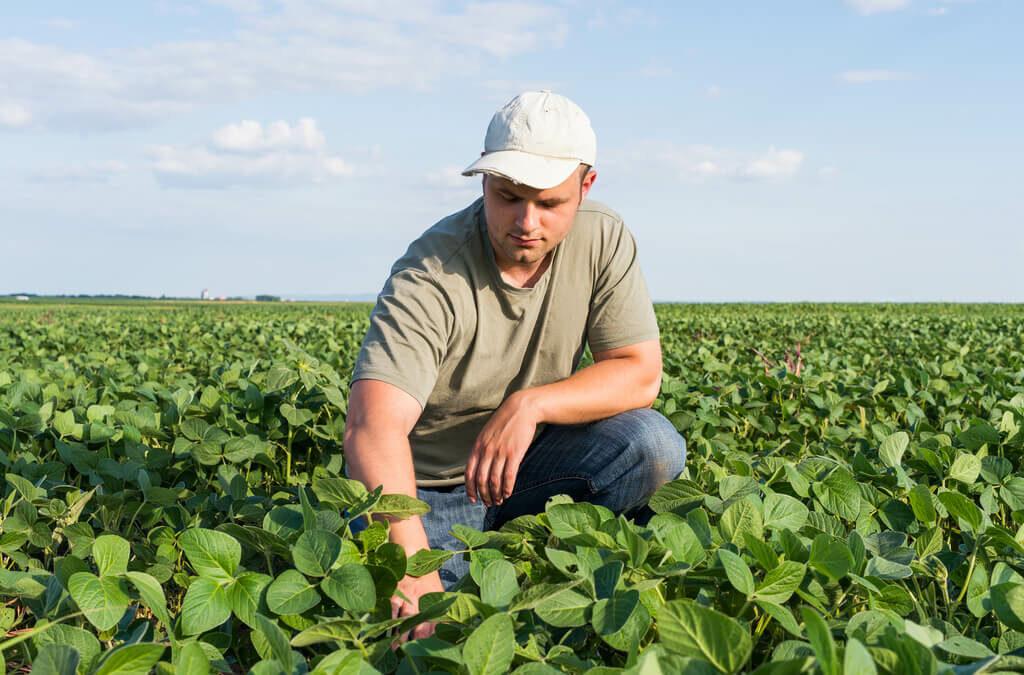 Produtor rural na lavoura de soja